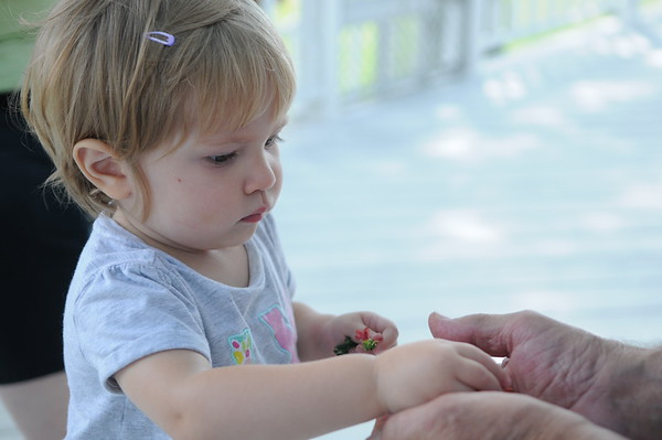 HALEY WARD | THE GOSHEN NEWS<br /> Hazel Eash, 18 months, gives her grandpa Ray a flower Thursday at their Middlebury farm.