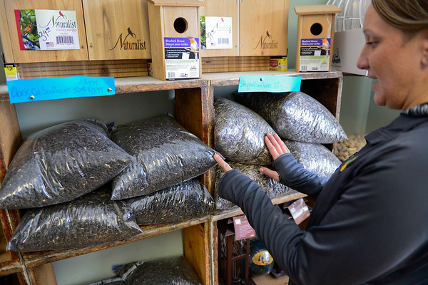 BEN MIKESELL | THE GOSHEN NEWS<br /> Jessica Watson points out the differences between black oil and striped sunflower seeds in her store, Jack's Feed Shack, Thursday in Bristol. Most birds in the area will eat sunflowers, and she also sells suet cakes.