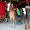 JOHN KLINE | THE GOSHEN NEWS <br /> Seth Nihiser, 12, of Defiance, Ohio, gives his horse a good brushing in the Draft Horse Barn during day one of the 2017 Elkhart County 4-H Fair early Friday morning.
