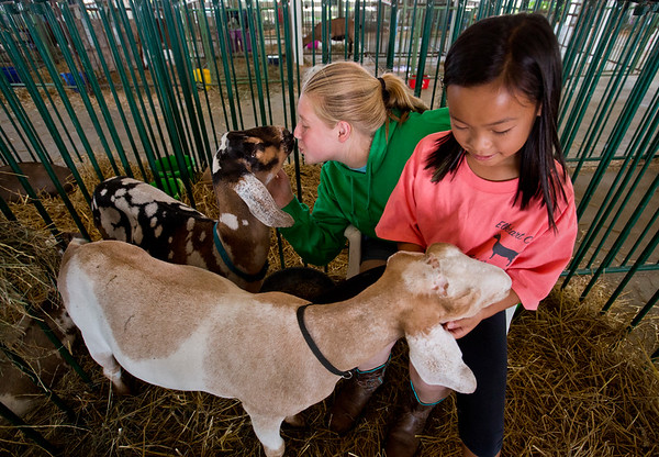 JAY YOUNG | THE GOSHEN NEWS<br /> Reagan Birr, 16, of Nappanee, gives her goat Felix a goodbye kiss while Kya Elias, 9, of Goshen, plays with Birr's other goat, George, Friday morning at the Elkhart County 4-H Fair.