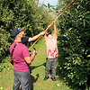 Roger Schneider | The Goshen News<br /> Patricia Lopez helps her son Cruz, 10, pick apples from the top of a tree at Kercher's Sunrise Orchard and Farm Market whie Jaime Lopez watches. The Warsaw family was enjoying the fall harvest festival Saturday at Kercher's Sunrise Orchard and Farm Market.