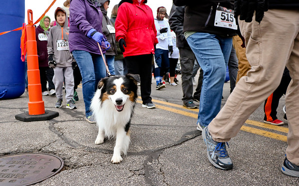 LEANDRA BEABOUT | THE GOSHEN NEWS<br /> Several dogs joined in on the walks during Thursday's Turkey Stampede.