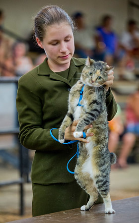 JAY YOUNG | THE GOSHEN NEWS<br /> Dog champion Saloma Kesler is tasked with showing a cat during the small animal round robin event Thursday evening at the Elkhart County 4-H Fair. White won the event.