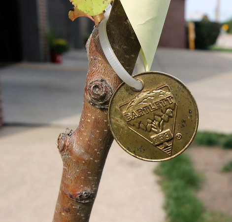 ADAM RANDALL | THE GOSHEN NEWS<br /> Each 9/11 sapling contains a medalion with a number etched into it for identification.