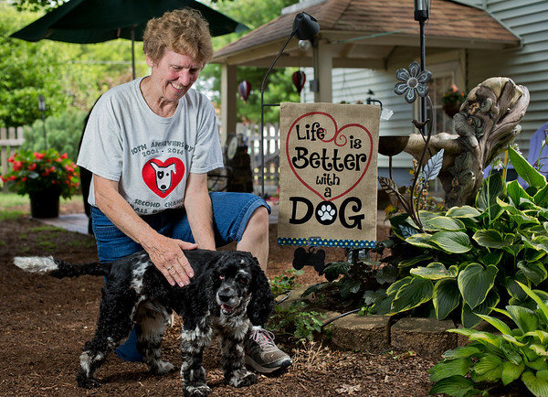 JAY YOUNG | THE GOSHEN NEWS<br /> Mary Krause plays with her foster dog, a cocker spaniel named Finnegan, at her home in Elkhart Tuesday afternoon. Krause is the director of Second Chance Small Dog Rescue.