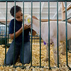 JAY YOUNG | THE GOSHEN NEWS<br /> Thirteen-year-old Amiyah Sykes spends time saying goodbye to her sheep Friday morning at the Elkhart County 4-H Fair.
