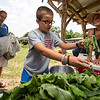 JAY YOUNG | THE GOSHEN NEWS<br /> Eleven-year-old Sam Schweinzger picks out fresh radishes while his father, Bill, both of Elkhart, waits and chats with Nicole Bauman Thursday afternoon at Red Oak Farm in Elkhart.
