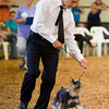JAY YOUNG | THE GOSHEN NEWS<br /> Cat champion Alexander Walker shows off his dog showing skills during the small animal round robin event Thursday evening at the Elkhart County 4-H Fair. White won the event.