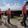 JAY YOUNG | THE GOSHEN NEWS<br /> From right, Cody Maust, 15, of Millersburg, Addison Holmes, 10, of Wakarusa and Treyson Holmes, 12, of Wakarusa, walk their goats to the arena for auction Friday morning at the Elkhart County 4-H Fair.