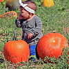 Roger Schneider | The Goshen News<br /> Patty Hernandez, 2, Elkhart, sits on pumpkins Saturday at Kercher's Sunrise Orchard and Farm Market. Patty was placed on the pumpkins by her parents, Valerie and Daniel Hernandez, who were taking her photograph.