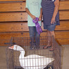 JOHN KLINE | THE GOSHEN NEWS<br /> Grand Champion Poultry Commercial Production winner Julian Schroeder, left, shows off his winning goose with buyer Deb Hershberger, Hershberger Heating Inc., during the Elkhart County 4-H Poultry Auction Friday afternoon.