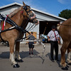 JAY YOUNG | THE GOSHEN NEWS<br /> Jason Honsberger works to hitch up a team of draft horses Tuesday evening at the Elkhart County 4-H Fair.