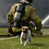 BEN MIKESELL | THE GOSHEN NEWS<br /> A dog runs around the yard, greeting fire fighters responding to a house fire at 11230 C.R. 34 east of Goshen Tuesday morning.