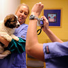 Pet Transfer.JPEG-0cad1.JPG Kelly Ross holds a puppy for a photo after arriving at the Humane Society of Boulder Valley, in Boulder, Colo., Tuesday,  Feb. 28, 2012. The puppy came from Oklahoma.  (AP Photo/The Denver Post, Joe Amon)  MANDATORY CREDIT; MAGS OUT; TV OUT