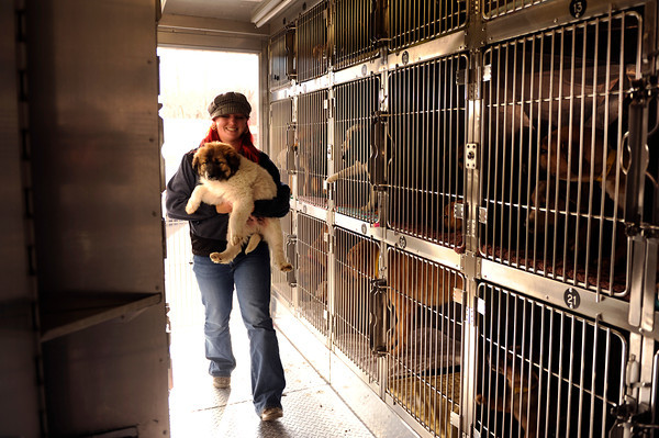 Pet Transfer.JPEG-02797.JPG Kharis Eppstein carries a puppy after arriving at the Humane Society of Boulder Valley, in Boulder, Colo., Tuesday,  Feb. 28, 2012. The puppies came from Oklahoma.  (AP Photo/The Denver Post, Joe Amon)  MANDATORY CREDIT; MAGS OUT; TV OUT