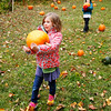 Thea Newbold, a first grader with the Village School of North Bennington finds the perfect pumpkin to take home and carve.