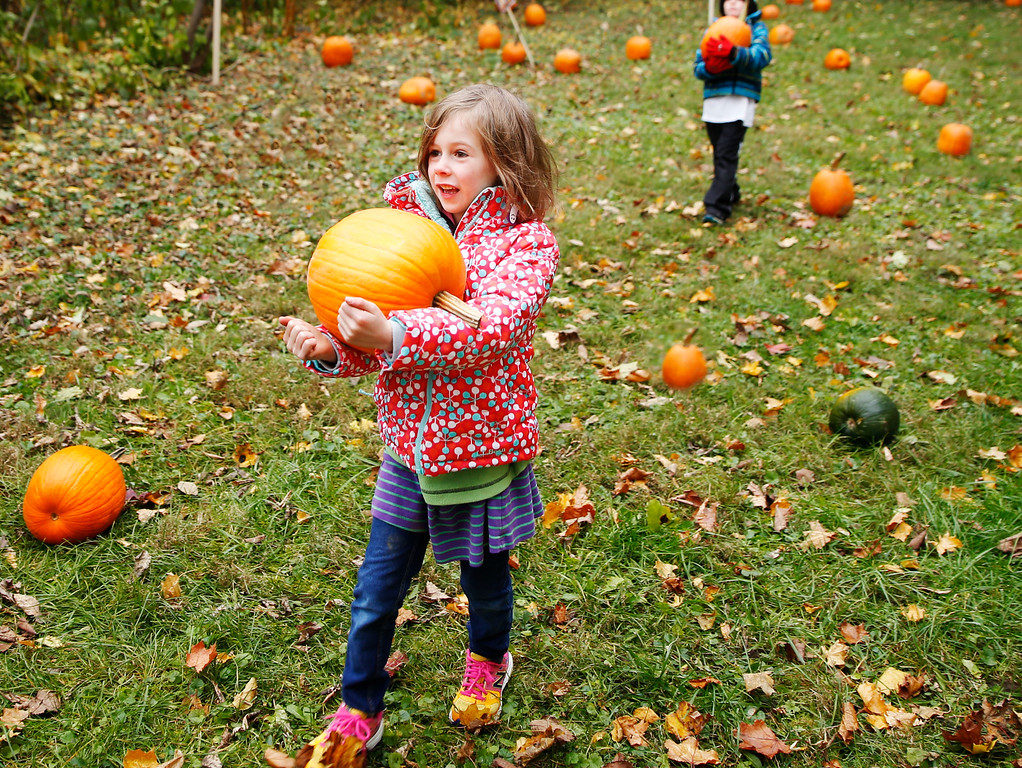 . Thea Newbold, a first grader with the Village School of North Bennington finds the perfect pumpkin to take home and carve.