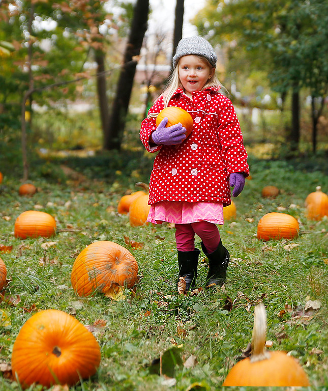 . Myla Coyne, a student in Pre - K smiles after finding the perfect pumpkin.