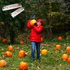 Village School 4th grader, Andrew Meher carries a big pumpkin on his shoulder.