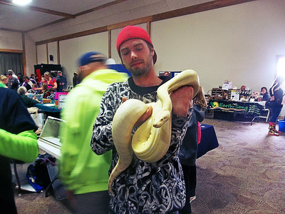 NIKKI RHOADES / GAZETTE Northern Ohio Association of Herpetologists (NOAH) member and Earth Day event volunteer Kevin Hosler shows off Sunfire, the sharp-strain Colombian red-tail boa on Saturday at Buffalo Creek Retreat in Seville.