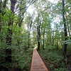 BEN GARVER — THE BERKSHIRE EAGLE<br /> The Berkshire Natural Resources Council is opening a trail to view Parsons Marsh in Lenox, Thursday, September 13, 2018. The 1800 foot trail is accessible to all and has an observation deck at the edge of the marsh.