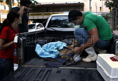 A veterinary volunteer takes care of a wounded dog just rescued from a private residence in Nova Friburgo, Rio de Janeiro state, Brazil, January 23, 2011 . Many volunteers are helping save hundred pets and others animals that were left behind by their owners or lost after they proprietors are killed in the mudslide in the mountainous region, when a massive wall of water descended narrow valleys, carrying away anything in it's path. (Austral Foto/Severino Silva)