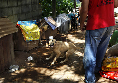 Volunteers take care of dogs victims of tragic mudslide in Nova Friburgo, Rio de Janeiro state, Brazil, January 22, 2011 . Many volunteers are helping save hundred pets and others animals that were left behind by their owners or lost after they proprietors are killed in the mudslide in the mountainous region, when a massive wall of water descended narrow valleys, carrying away anything in it's path. (Austral Foto/Severino Silva)