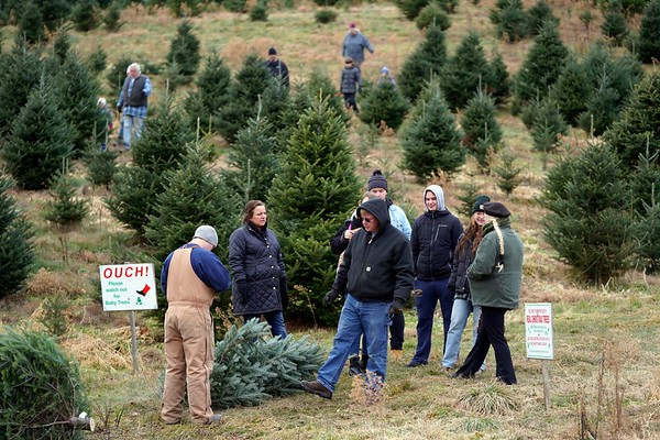 BEN GARVER — THE BERKSHIRE EAGLE<br /> A family chooses for a Christmas tree from the cut your own area at Ioka Valley Farm in Hancock,  Mass., Friday, November 29, 2019.