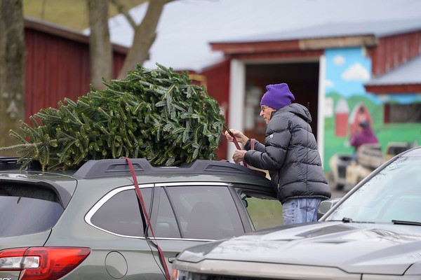 BEN GARVER — THE BERKSHIRE EAGLE<br /> David Horton ties a Christmas tree to the roof of his car at Ioka Valley Farm in Hancock,  Mass., Friday, November 29, 2019.