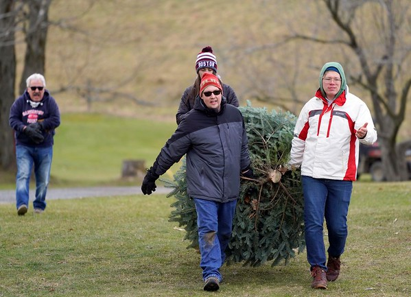 BEN GARVER — THE BERKSHIRE EAGLE<br /> Ian DeAngelis and Alex Babcock haul a Christmas tree out of the field at Ioka Valley Farm in Hancock,  Mass., Friday, November 29, 2019.