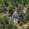 BEN GARVER — THE BERKSHIRE EAGLE<br /> The Beckwith Family hunts for a Christmas tree to cut  at Ioka Valley Farm in Hancock,  Mass., Friday, November 29, 2019.