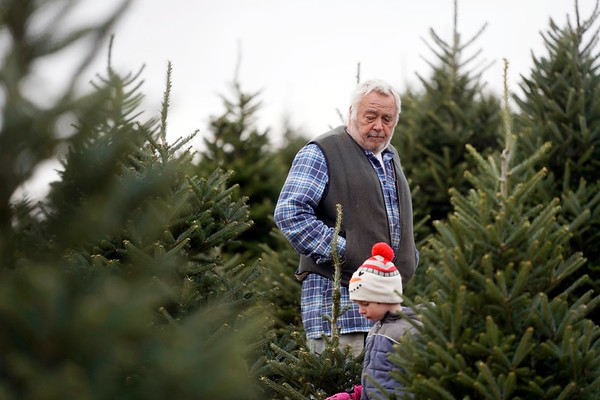 BEN GARVER — THE BERKSHIRE EAGLE<br /> Brian Hoskeer and his grandson Hudson Beckwith, age 4, look for a Christmass tree to cut  at Ioka Valley Farm in Hancock,  Mass., Friday, November 29, 2019.