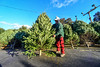 KRISTOPHER RADDER - BRATTLEBORO REFORMER <br /> Loic Danjou, 57, owner of Danjou Tree Farm, from Canaan, Vt., shakes some of the dead needles off a tree on Friday, Dec. 9, 2016.