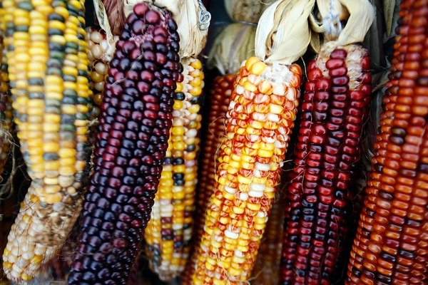 Pittsfield Farmers Market Harvest Festival-101318