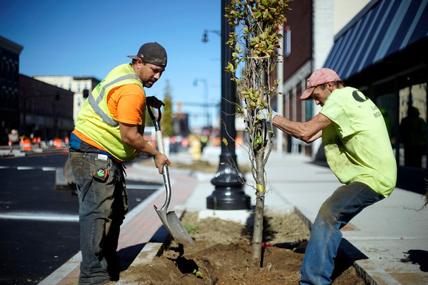 Pittsfield Streetscape trees - 101216