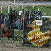 Animals to climb on are fenced off during COVID-19 pandemic emergency, at the playgound by Roudenbush Community Center in Westford. (SUN/Julia Malakie)