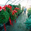 BEN GARVER — THE BERKSHIRE EAGLE<br /> Dan Tawczynski walks through a greenhouse filled with holiday decoration orders, Tuesday, November 26, 2019. Each year hundreds of wreaths and miles of garland are manufactured at the farm.