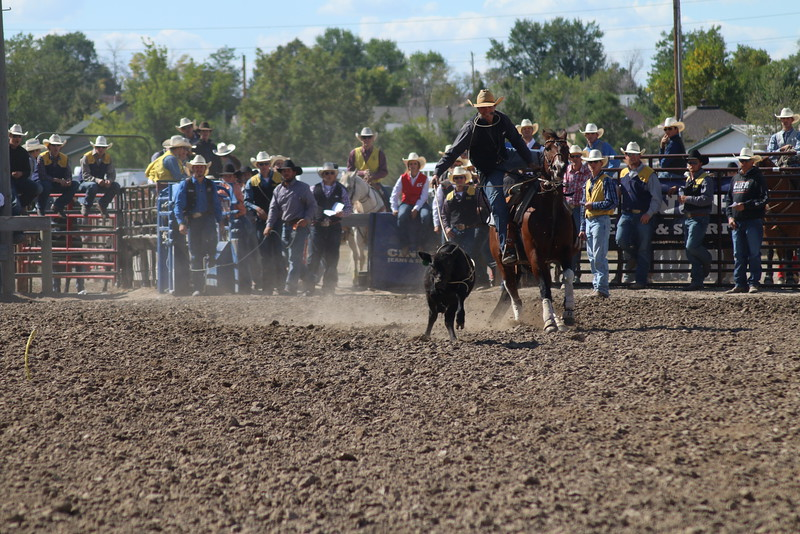 Chadron State cowboy Prestyn Novak of Newell, South Dakota, shown at the Sept.16-18, 2016, CSC rodeo, won the tie down roping at the Sheridan College rodeo this past weekend with times 10.4 and 10.2 seconds. He also had the fastest time of 11.0 seconds during this run at the CSC rodeo. (Con Marshall)