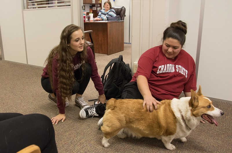 Chadron State College students, from left, Ashley Tarnick of Doniphan, Neb., and Cristina Bravo of North Platte, Neb., participate in pet therapy during finals week in the Project Strive/TRiO office Tuesday, May 2, 2017. (Photo by Tena L. Cook/Chadron State College)