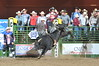 Dakota Rice in the bull riding competition at the College National Finals Rodeo in Casper in June 2016. (Hubbell Photos).