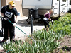 Wendy Jamison,  Associate Professor and Department Chair of Physical & Life Sciences at Chadron State College, and daughter Hannah clean a flower bed at a Chadron resident's home during The Big Event Saturday, April 22, 2017. (Photo by Kelsey R. Brummels/Chadron State College)