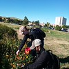Chadron State College students collect seeds Sept. 20, 2017, from the Living Fence that parallels 10th Street on the east side of campus. (Courtesy photo)