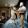 BEN GARVER — THE BERKSHIRE EAGLE<br /> Larry Records  holds a llama for the audience at the Berkshire Museum, Friday, February 22, 2019. Alexandra Burpee and Larry Records of Dudley, Ma, make up the Records and Burpee Zoo Show, a traveling educational show featuring unusual animals.