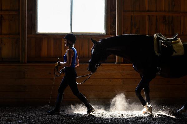 Rehabilitating a horse - 080516