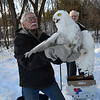 After three weeks of rehabilitation, a snowy owl, an arctic species,  was released back into the wild in Putney, Vt., on Wednesday, Jan. 10, 2018.
