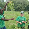 GILLIAN JONES - THE BERKSHIRE EAGLE<br /> From left, Jaclyn Boateng, 16, Julianna Martinez, 16, and Mary Howe, 17, weed the fields at Holiday Brook Farm in Dalton as part Roots Rising, a collaboration between the Alchemy Initiative and Berkshire Botanical Garden, that has 10 Pittsfield teenagers working at several different area farms this summer. Tuesday, July 11, 2017.
