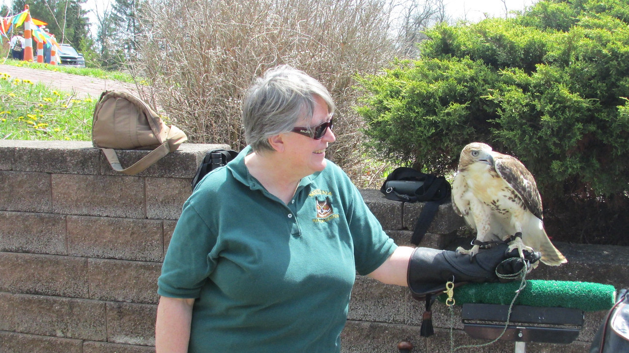 PHOTO PROVIDED Laura Jordan of the Medina Raptor Center is shown with a red tail hawk. The center will have exhibits on display from 5 to 8 p.m. Wednesday at the Rocky River Watershed Council's volunteer picnic at Mill Stream Park, 1262 Maple St., Valley City in Liverpool Township.