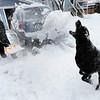 Art Allen throws snow for his dog Willie as he clears his Boulder, Colorado driveway after a winter snowstorm.<br /> Photo by Paul Aiken / The Camera / February 3, 2012