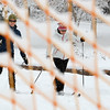 "Laura Freeman, left, and Molly Higginbottom are seen skiing through a fence at North Boulder Park.<br /> For more photos of the snow, go to  <a href=""http://www.dailycamera.com"">http://www.dailycamera.com</a>.<br /> Cliff Grassmick / November 2, 2011"
