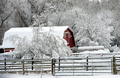 A barn south of Longmont makes a nice winter scene on November 2, 2011. For more photos of the snow, go to www.dailycamera.com. Cliff Grassmick / November 2, 2011